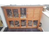 2 house rabbits and hutch for sale