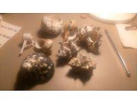 Land hermit crabs shells,seashells Shells
