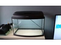 Tropical Aquarium setup - 40 litre bow front