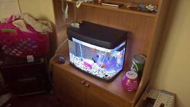pets at home 40l fish tank like new