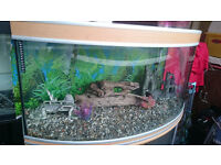 AQUA ONE 300 LITER BOW FRONTED FISH TANK FOR SALE,,FULL SET UP, WITH aqua one 1200 EXTERNAL FILTER,
