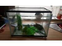 50L fish tank