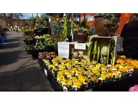 Plantarea Sales Assistant at Clandon Park Garden Centre