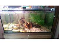 150l fish tank and fish