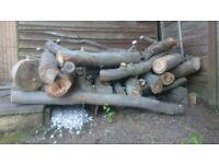 Eucalyptus Firewood logs cut 3rd July