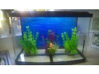 Marina Vue fish tank and full set up