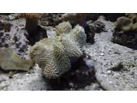 assorted mix soft corals