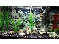 Fish tank 125 l inc.air pump,filter,light and 12 fishes