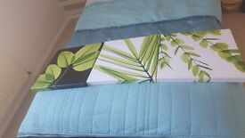 Next lime canvas style picture's