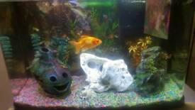 Selling aquarium