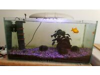 Large fish tank with all accessories. 30 x 40 x 76.