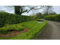 Gardening Services , Hedge Trimming , Grass cutting , Weeding etc