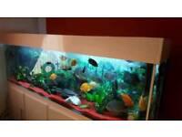 7ft fish tank