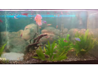 200l fish tank with stand, cover, filter, heater, light etc