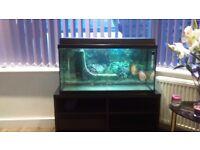 aquarium juwell 80 with eheim filter ,av540pump,200 watt heater ,stand