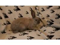 Sweet little bunny rabbits £25.00 EACH ONE BOY ONE GIRL