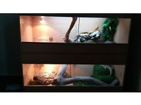 For sale two bearded dragon set ups.