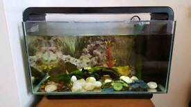 Fish tank complete with accessories & 5 guppy fish