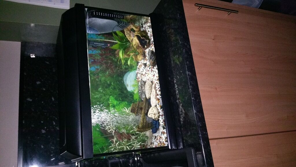 Piranha Fish Tank Fish Tank Set up With 7 Fish