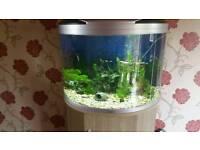 Aqua Mode 900 Fish Tank
