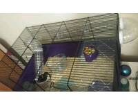 Syrian male hamster & cage