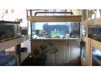 5.5ft by 2.5 by 2.5 ft aquarium setup oak look unit
