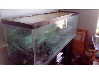 Large fish tank