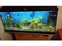 3foot fish tank swap