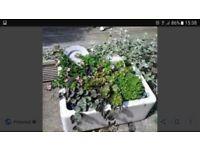 Nice garden feauture. Belfast sink. Reduced £25.
