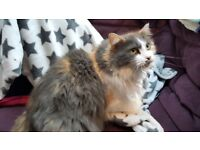New home needed for beautiful gentle cat