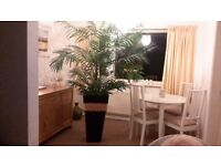 7ft silk potted palm