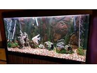 Fish tank with filter. heater. And 14 fishes