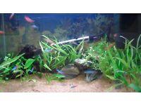 Clearseal Aquarium