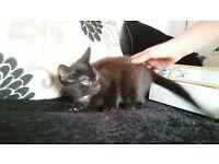 Boy kitten ready now