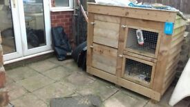 Hutch for guinea pigs