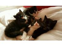 6 beautiful kittens