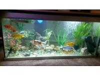 One meter Fish tank no scratches aquarium