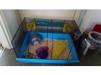 Hampster with cage and extras