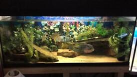 Fish tank full setup for sale