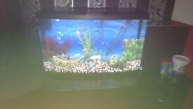 Fish tank n all accessories including stones