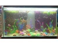 Guppies for sale...£1 each