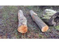 Lime hardwood tree trunks ideal for milling craving aand greenwood working.