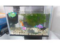 Fish tank and two fish