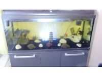 Large fish tank with fish & accesories