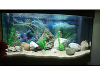 Juwel vision 180 aquarium fishtank fish tank