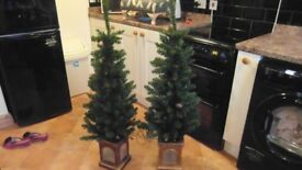 Pair of pre-lit Christmas trees.