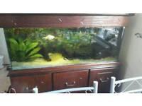 4ft fish tank 210ltr