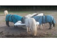 disabled owner looking for weekday help with rescued miniature ponies. experience not essential