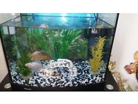 Aqua-65 Aquarium tank + 6 cold water fish and Accessories