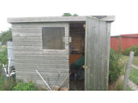 Large Shed - Strong Shed